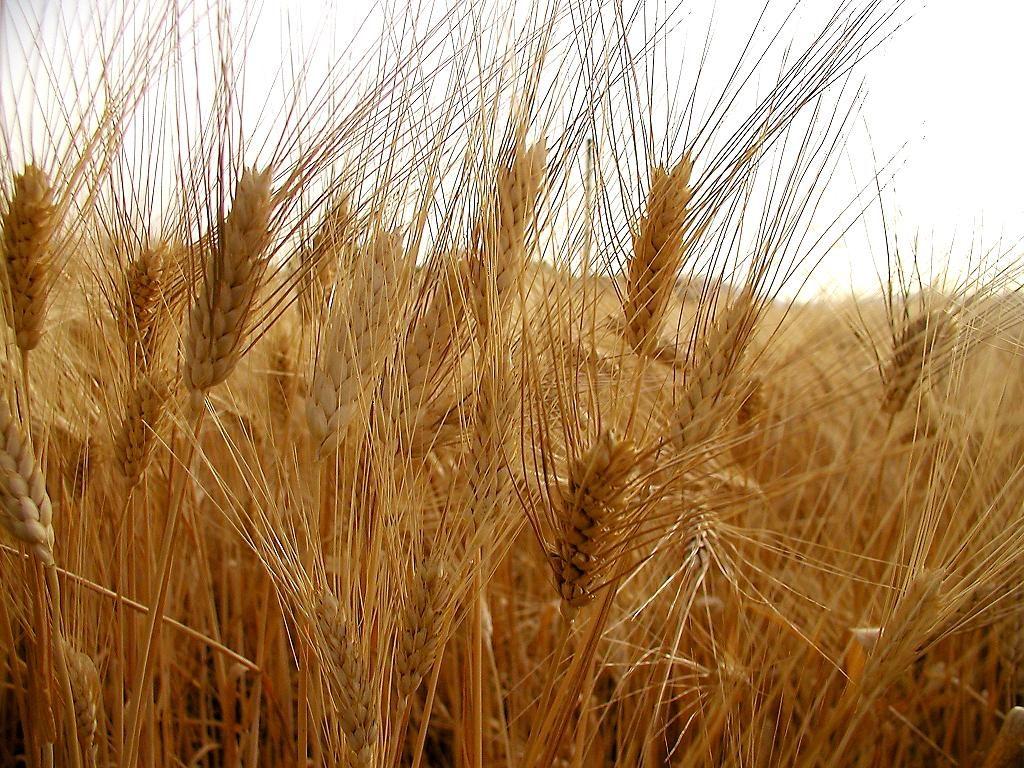 Camera: passa all'esame del Senato il testo unificato sull'agricoltura biologica